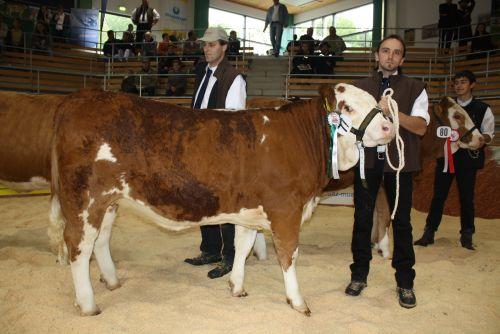 Mia, eine Gigant Tochter wurde bei der Bundesfleischrinderschau 2010 in Greinbach Gruppenreservesiegerin,sowie Bemuskelungssiegerin